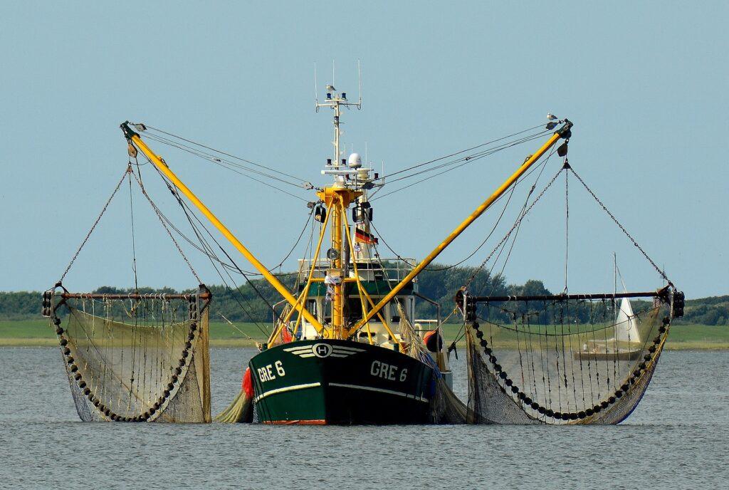 pesca incidental o bycatch